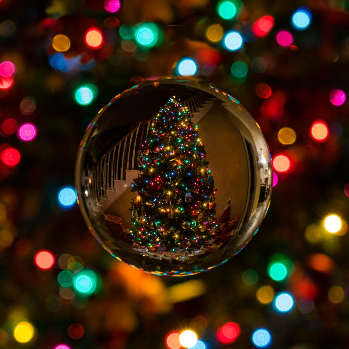 """Holiday '17: """"Sibling Revelry"""" by EileenCunniffe"""